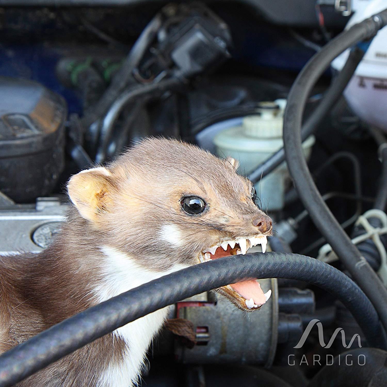 Boitier anti-fouine pour votre voiture
